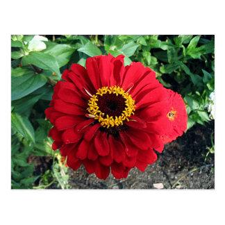 Rote Blume Postkarten