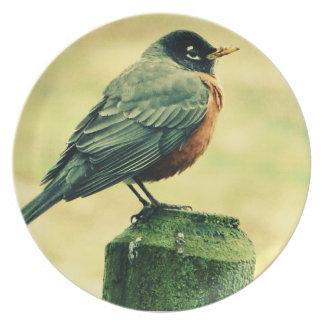 Rote Brust Robins auf Land-Zaun-Posten Teller