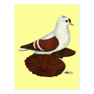 Rote Flügel-Taube Postkarte