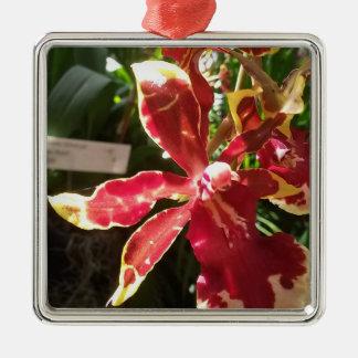 Rote gelbe Orchideen-erstklassige quadratische Silbernes Ornament