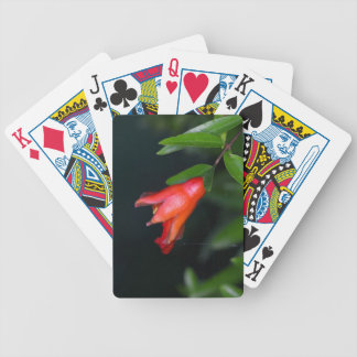 Rote Granatapfel-Blume (Punica granatum) auf einem Bicycle Spielkarten