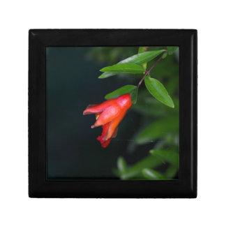Rote Granatapfel-Blume (Punica granatum) auf einem Erinnerungskiste