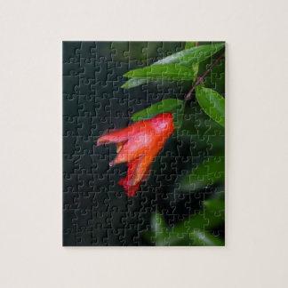 Rote Granatapfel-Blume (Punica granatum) auf einem Puzzle