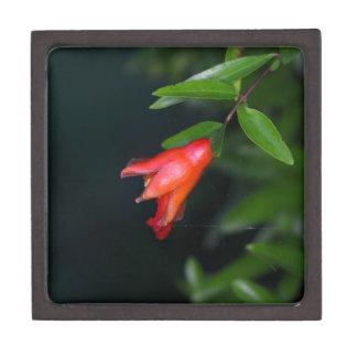Rote Granatapfel-Blume (Punica granatum) auf einem Schmuckkiste