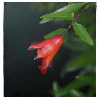 Rote Granatapfel-Blume (Punica granatum) auf einem Serviette