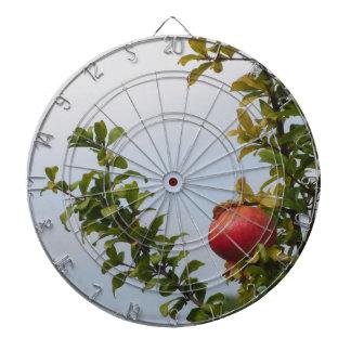 Rote Granatapfelfrucht des Singles auf dem Baum im Dartscheibe