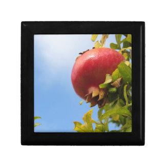 Rote Granatapfelfrucht des Singles auf dem Baum im Erinnerungskiste