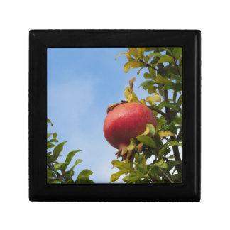 Rote Granatapfelfrucht des Singles auf dem Baum im Geschenkbox