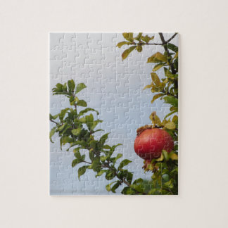 Rote Granatapfelfrucht des Singles auf dem Baum im Puzzle