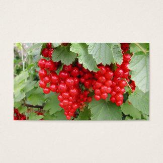 Rote Johannisbeeren auf der Pflanze. Grün-Blätter Visitenkarte