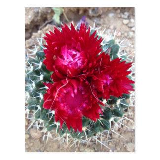 Rote Kaktus-Blume Postkarte
