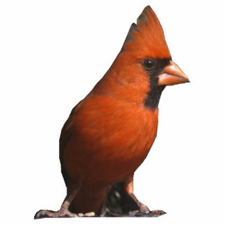 Rote Kardinals-Foto-Skulptur Fotoskulptur Ornament