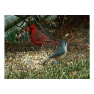 Rote Kardinaltitmouse-Vögel Fotodruck
