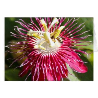 Rote Leidenschafts-Blume mit Biene Karte