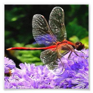Rote Libelle auf violetten lila Blumen Fotodruck