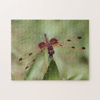 Rote Libelle Puzzle