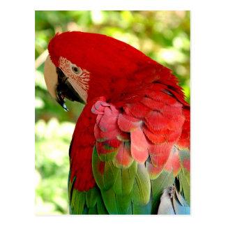Rote Macaw-Papageien-Postkarte 2 Postkarte