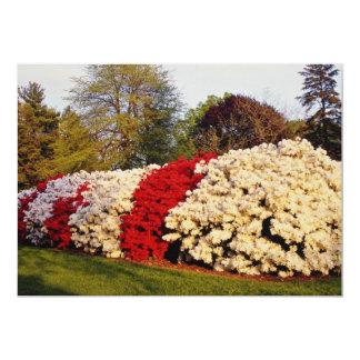 Rote Masse der Azaleenbüsche verschönert Boden Individuelle Ankündigungen