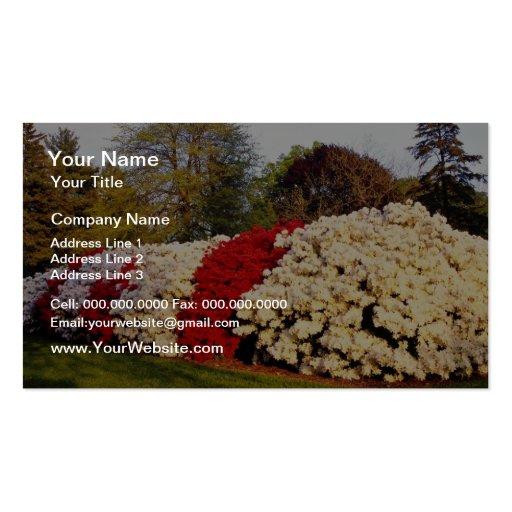 Rote Masse der Azaleenbüsche verschönert Boden Visitenkarten