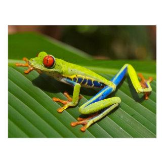 Rote mit Augen Baum-Frosch-Postkarte Postkarte