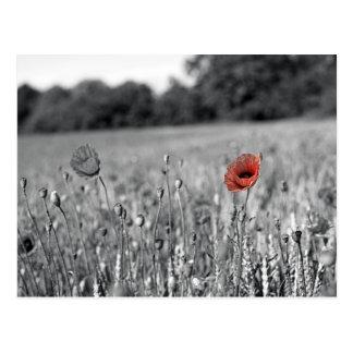 rote Mohnblume auf einem Schwarzweiss-Gebiet Postkarte