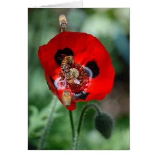 Rote Mohnblumen-Blume - Bienen-Invasion Karte