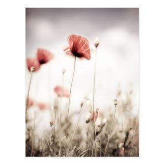 Rote Mohnblumen-Blumen Postkarte