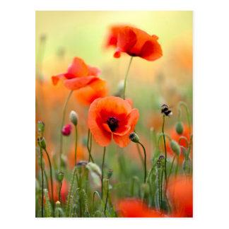 Rote Mohnblumen-Blumen Postkarten