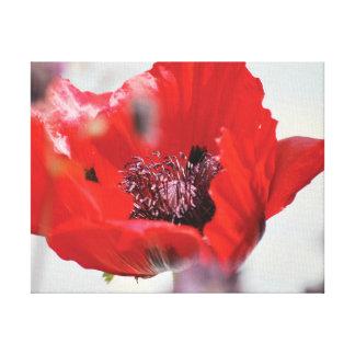 Rote Mohnblumenmitte des schönen Nahaufnahme-Fotos Leinwanddruck