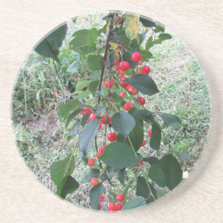 Rote Montmorency-Kirschen auf Baum im Kirschgarten Getränkeuntersetzer