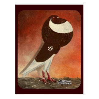 Rote Norwich-Abschneider-Taube Postkarte