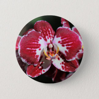 Rote Orchidee Runder Button 5,7 Cm