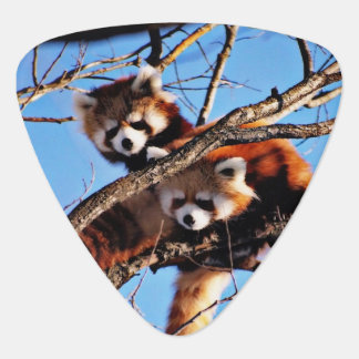 rote Pandas Plektrum