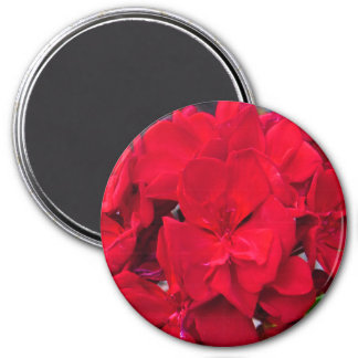 Rote Pelargonie-Blüte Runder Magnet 7,6 Cm