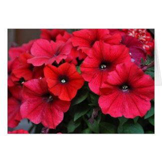 Rote Petunie-Blumen Karte