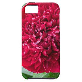 Rote Pfingstrosen-Blume iPhone 5 Hülle