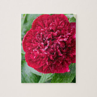 Rote Pfingstrosen-Blume Puzzle