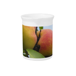 Rote Pfirsiche, die am Baum hängen. Toskana, Getränke Pitcher