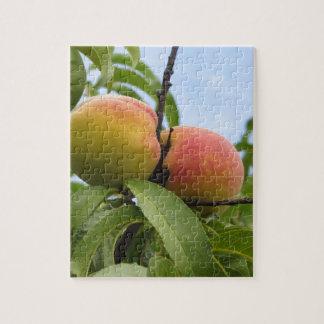 Rote Pfirsiche, die am Baum hängen. Toskana, Puzzle