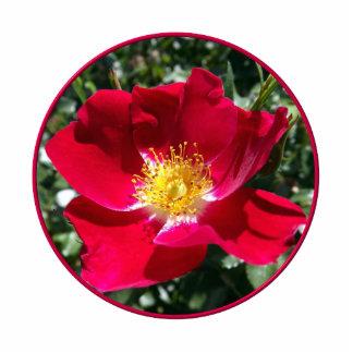 Rote/pinkfarbene Rose Freistehende Fotoskulptur