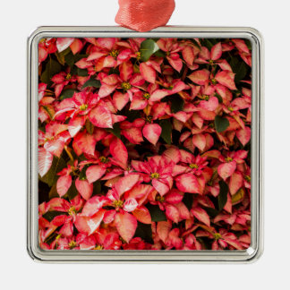 Rote Poinsettia-WeihnachtsBlume Silbernes Ornament