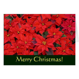 Rote Poinsettia-Weihnachtskarte (freier Raum nach Karte
