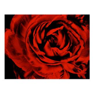 Rote Ranunculus-Blumen-Nahaufnahme-buntes Blumen Postkarte