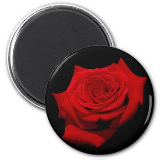Rote Rose auf schwarzem Hintergrund Runder Magnet 5,7 Cm