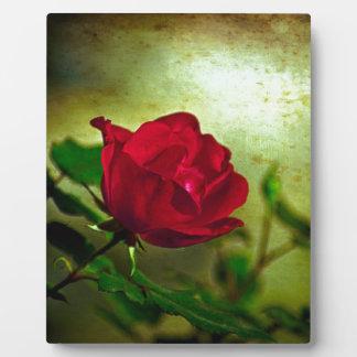 Rote Rose der Tag mystischer Gartengotische Fotoplatte