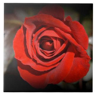 Rote Rose Fliese