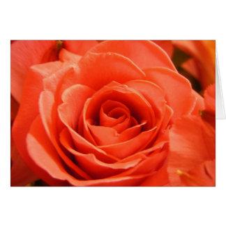Rote Rose Karte