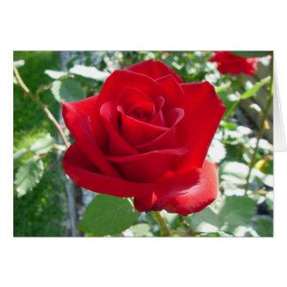 """Rote Rose "" Karte"