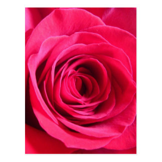 Rote Rose * Liebe Postkarte