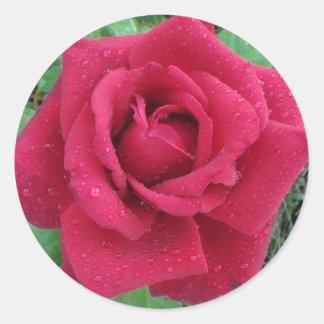 Rote Rose mit Regentropfen auf Runder Aufkleber
